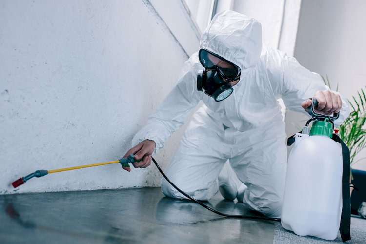 Bed Bug Pest Control Experts Debunks The Common Myths Regarding Bed Bugs