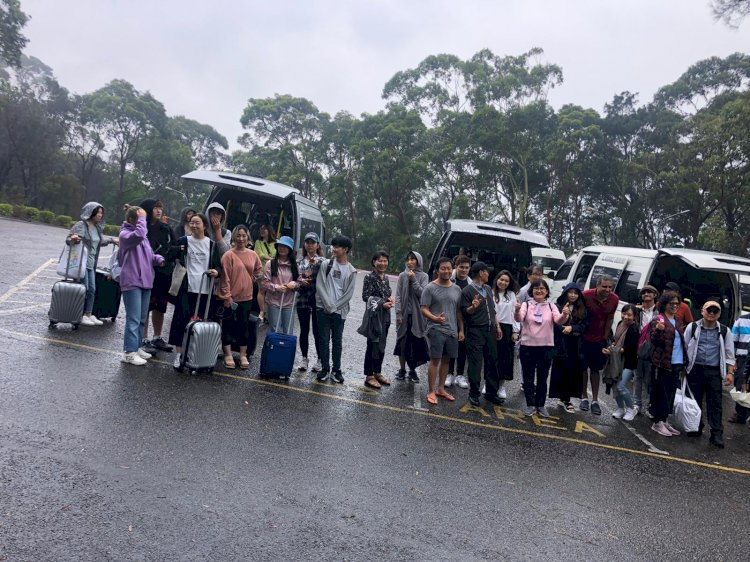how many seats in a maxi cab services in Sydney?