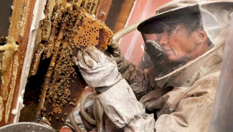 Benefits of a Preventative Pest Control Plan